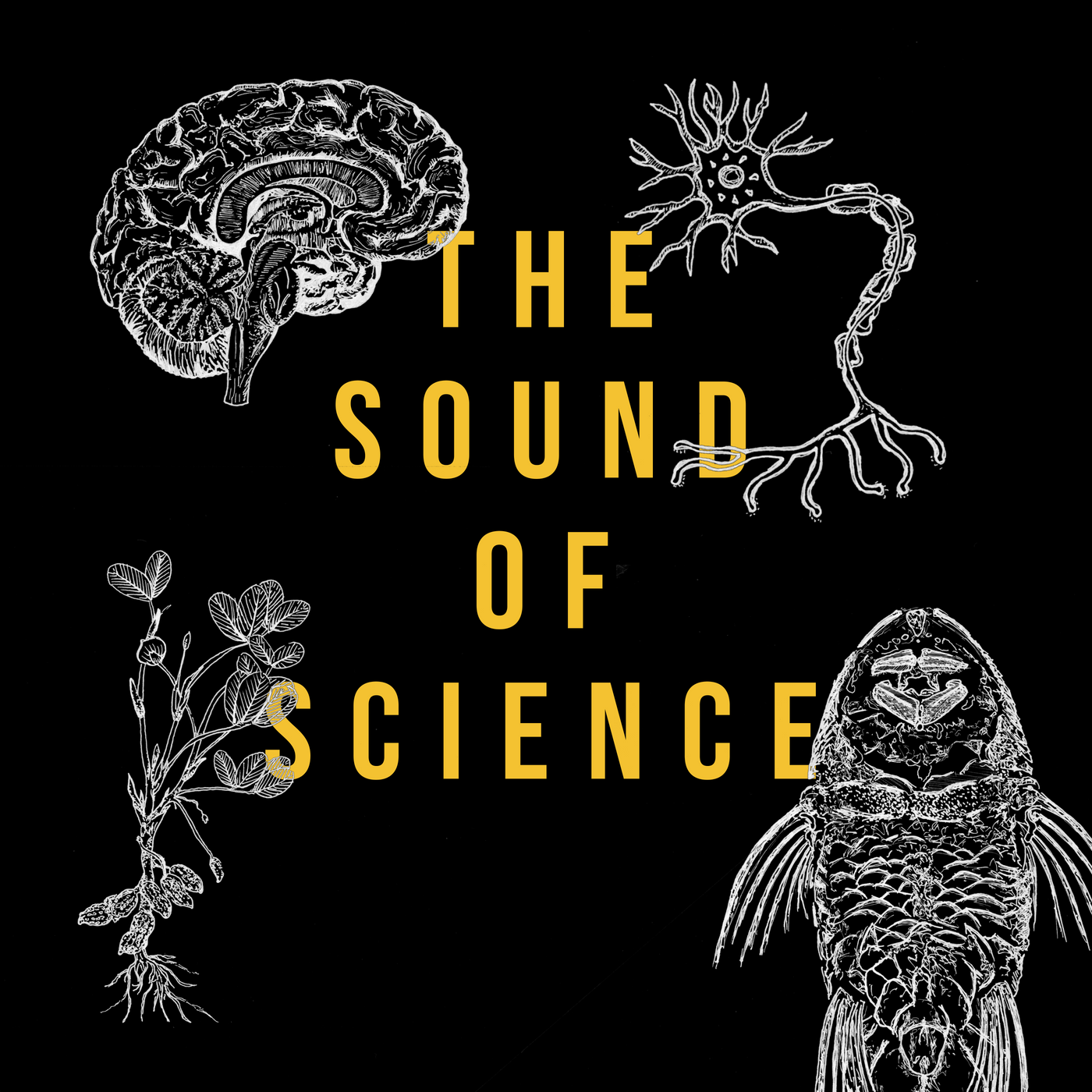 Golden Hornet's The Sound of Science featuring Jeffrey ...